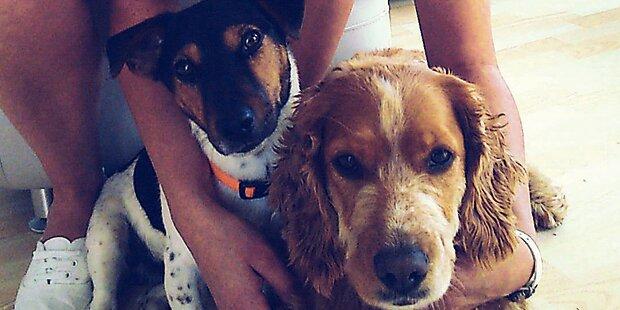 Tierhasser vergiftet 2 Hunde