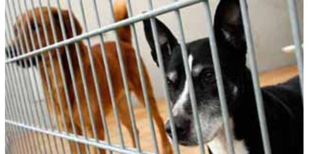Chinalokal in Moskau servierte Hundefleisch