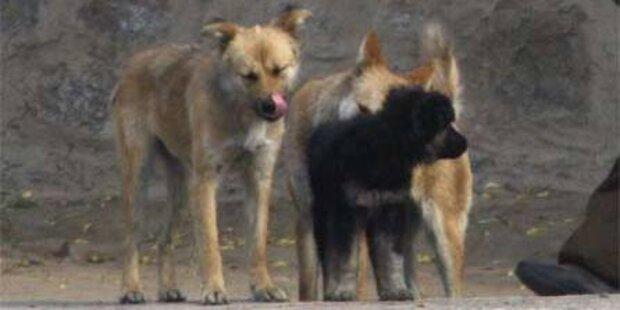 Stadtverwaltung lässt 37.500 Hunde töten
