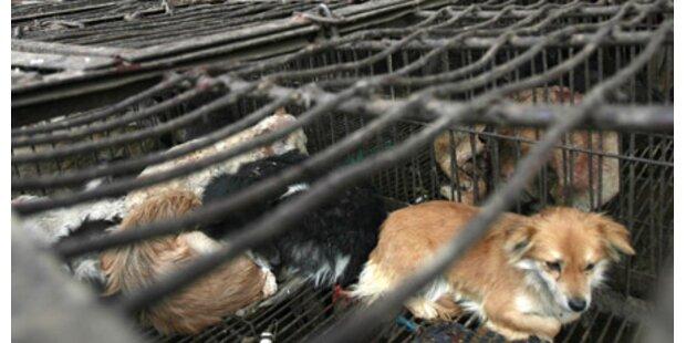 China will Hundefleisch verbieten