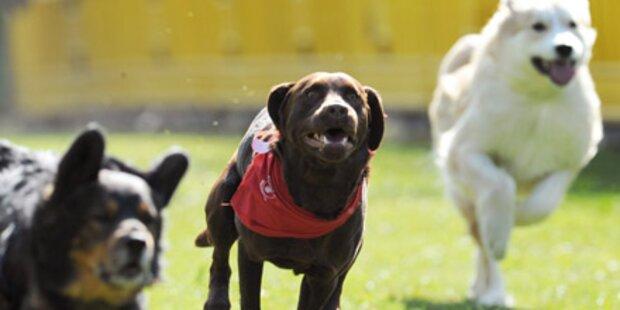 Indien eröffnet Blutbank für Hunde