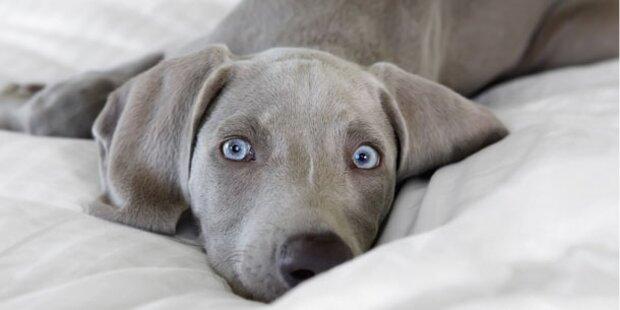 Hunde-Luxushotel eröffnet in NY