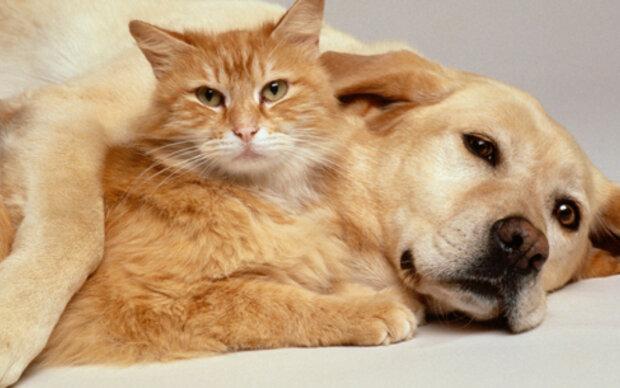 So könnten Hunde und Katzen länger leben