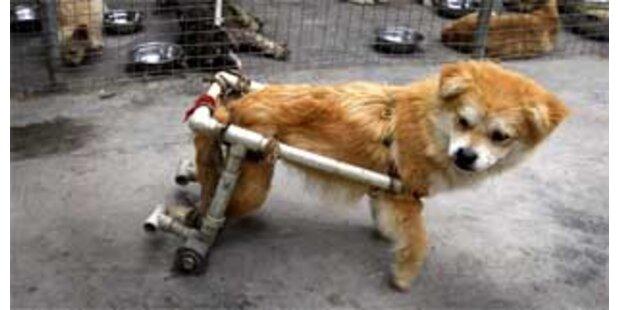 Hunde-Reha in China