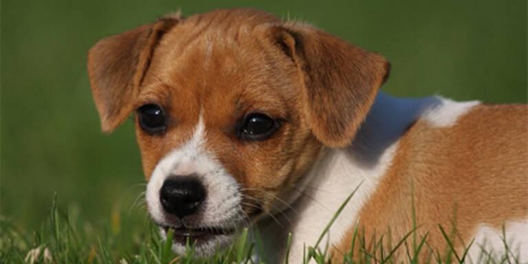 Hund per Mund-zu-Schnauze-Beatmung gerettet