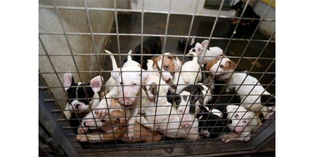 So elend hausen die 137 Hunde-Babys