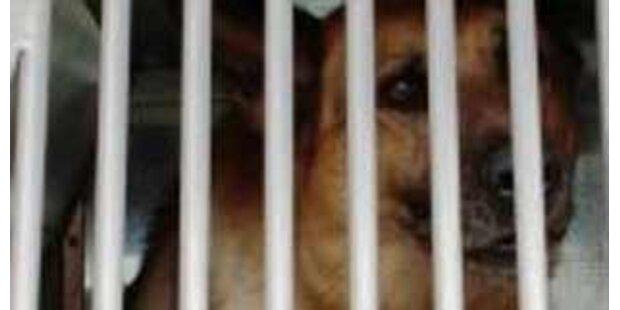 Taliban-Kämpfer wurden in Hundezwingern gehalten