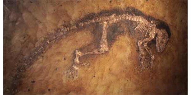Vorfahre von Mensch und Affe entdeckt