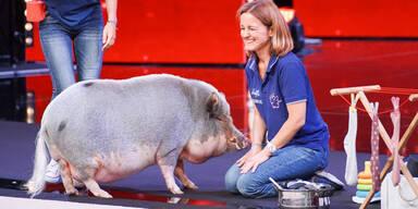Supertalent: Dieses Austro-Schwein hat es auf Bohlen abgesehen
