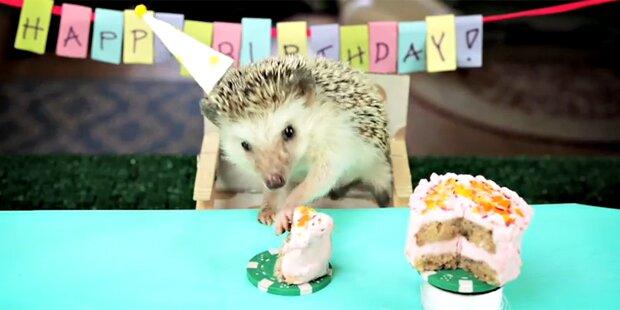 Igel feiert die kleinste Party der Welt