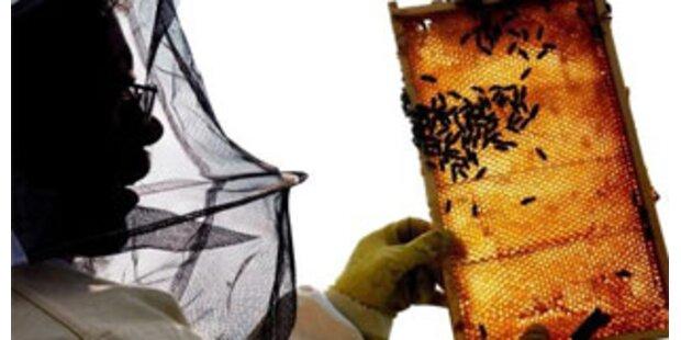 Herz-Kreislauf-Stillstand nach Bienenstich