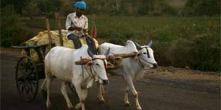Verbot von Haarfärbemittel nach Bauernselbstmorden