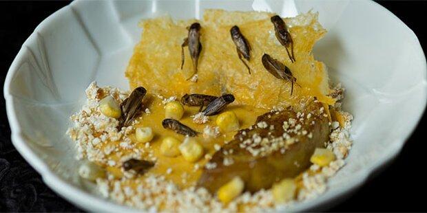 UN-Bericht empfiehlt Insekten als Nahrung