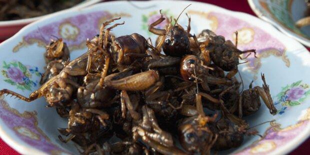 Essbare Insekten auf dem Teller