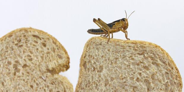 Brot mit Insekten zum Frühstück?