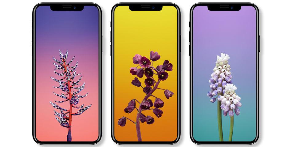iphone-8-bzw-x-960-mockup.jpg