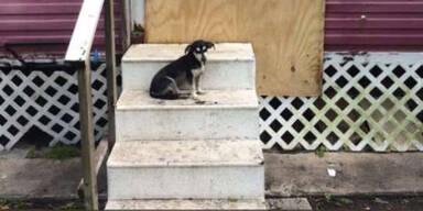 Hurrikan: Gewissenlosen Tierbesitzern droht Verurteilung