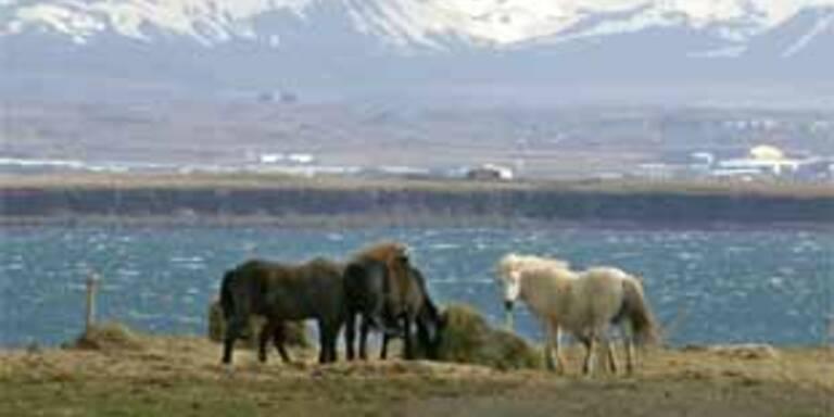Bis zu 30 Verletzte nach Erdbeben in Island