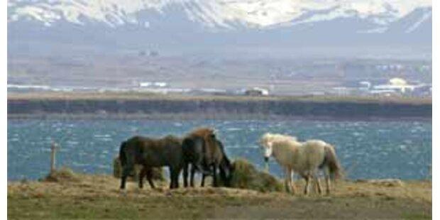 Island bei ebay zu ersteigern