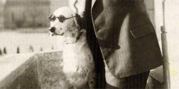 Nazis jagten Hitler imitierenden Hund