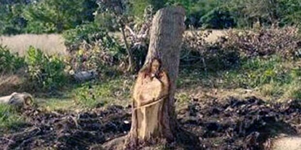 Wunder: Jesus taucht in Baumstamm auf