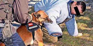 Hund Bundesheer