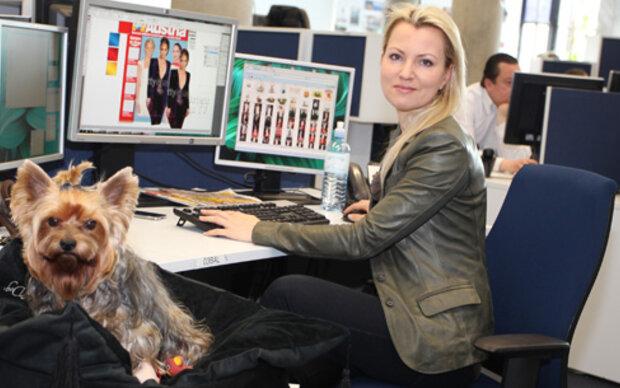 Hunde am Arbeitsplatz reduzieren Stress