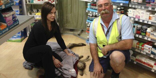 Känguru verirrte sich in Flughafen