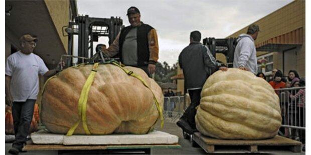 752 Kilo Riesen-Kürbis prämiert