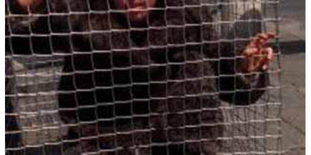 Amerikaner sperrte Töchter in einem Käfig ins Auto