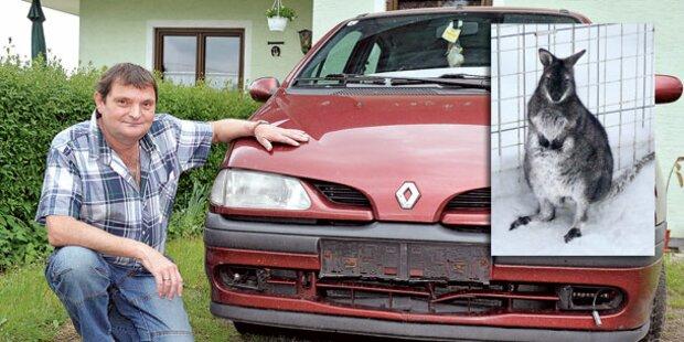 Auto-Crash mit Känguru