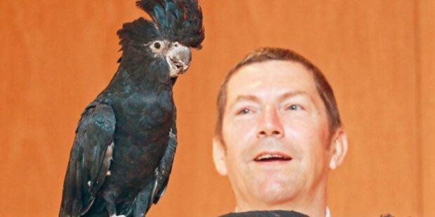 Skurriler Prozess um Kärntner Kakadu