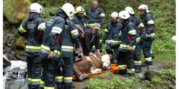 Feuerwehr rettet Kälber vor Erstickungstod