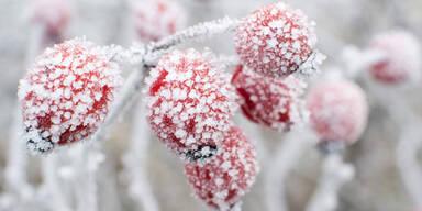 Der kälteste Jänner seit 30 Jahren