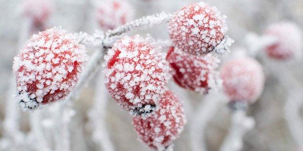 Kälte-Einbruch: Der Schnee kommt zurück