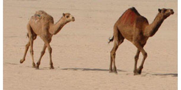 Australier machen Jagd auf Kamele