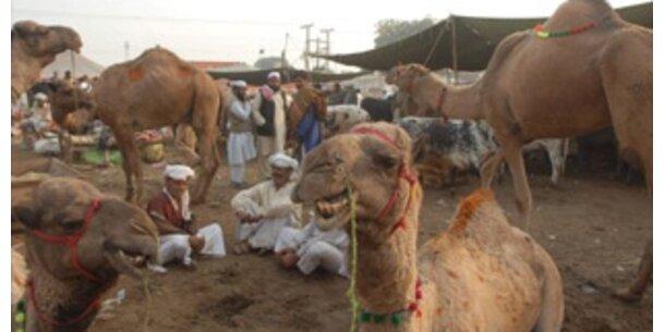 Kamelfleisch als Beitrag zum Umweltschutz