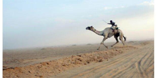 2000 Kamele in Saudi-Arabien vergiftet