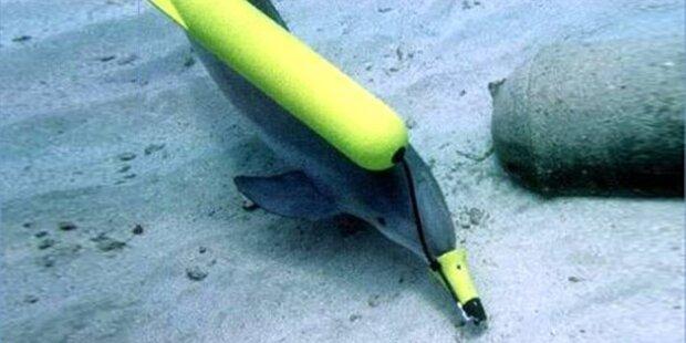 Russische Marine hat jetzt Kampf-Delfine