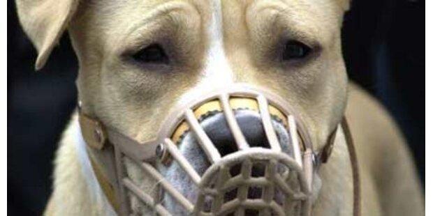 Ansturm auf Wiener Hundeführschein