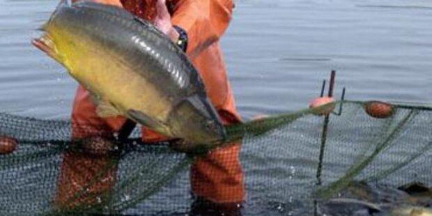Zwei Tonnen Fische in NÖ verendet