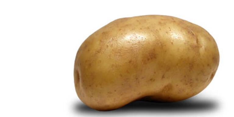 Stöger verbietet Anbau von Gen-Kartoffel