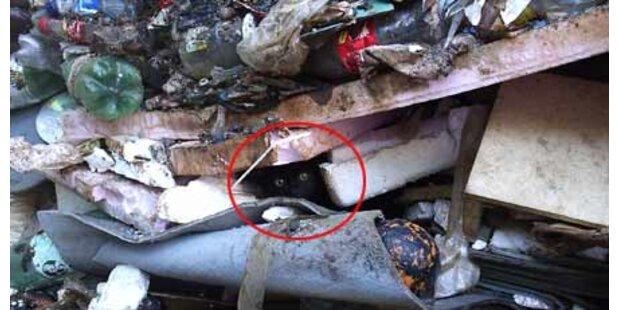 Feuerwehr fischt Katze aus dem Müll