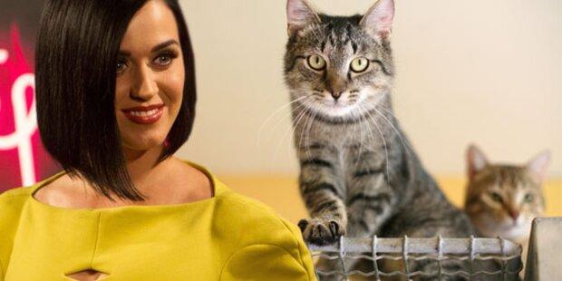 Perry schickt ihre Katzen zum Psychiater