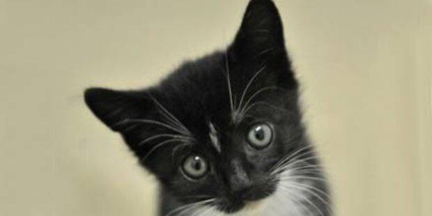 Kätzchen aus Radkasten gerettet