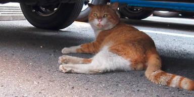 Achtung vor fiesem Katzen-Trick