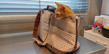 Katze in Handtasche ausgesetzt