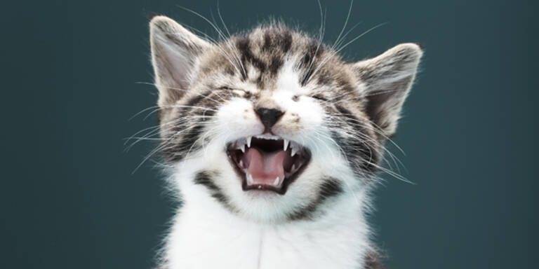 Das ist das süßeste Katzen-Projekt der Welt