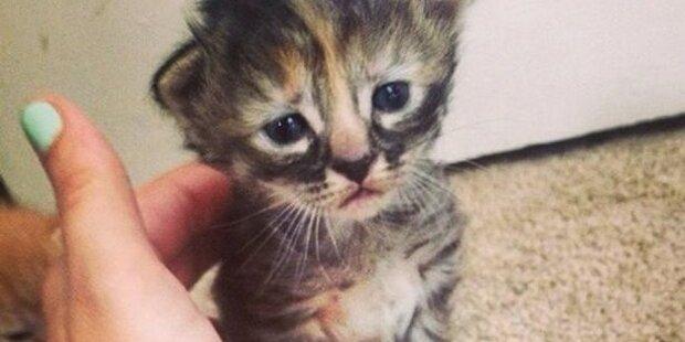 Das wohl traurigste Kätzchen der Welt