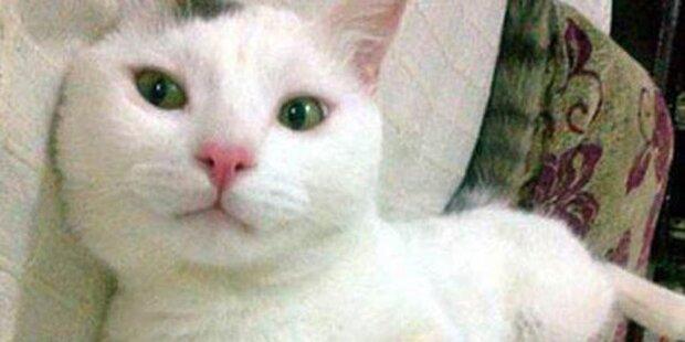 Katze schlägt Vergewaltiger in die Flucht